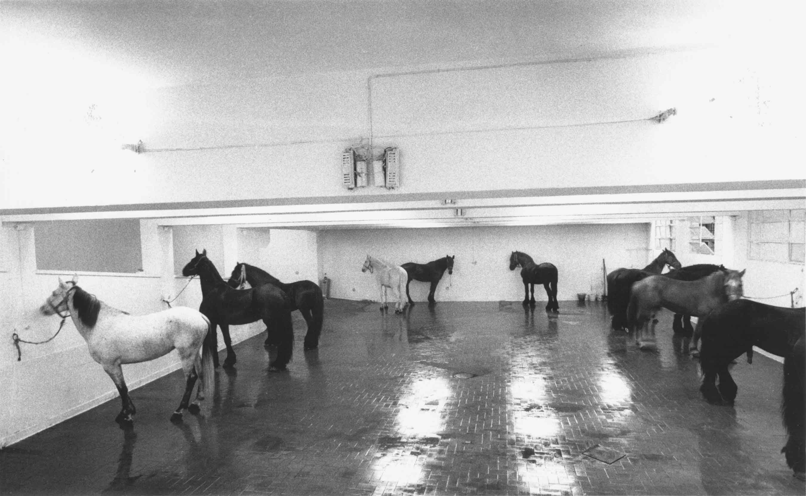 Jannis Kounellis, Untitled, 1969. Galleria L'Attico, Rome. Photo: Claudio Abate.