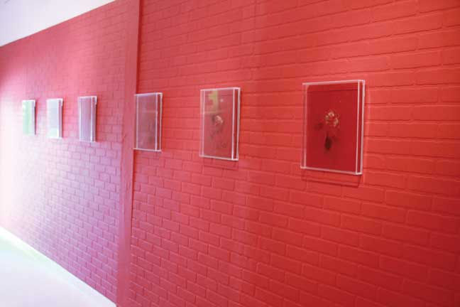 Domingo De Lucia, Social Entropy, 2012, acrylic paint and aerobic bacteria, installation view at MIArt Space, Miami, 2017.